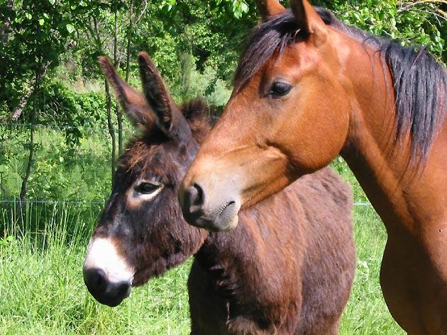 Photo Ane et cheval